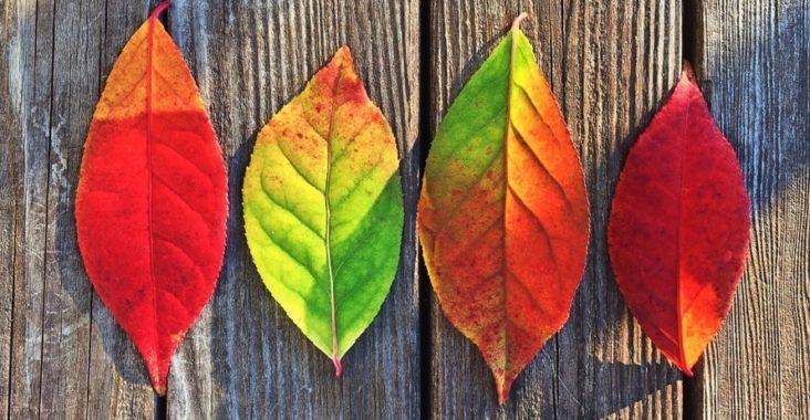 autumn fall diffuser